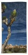 Joshua Tree In Joshua Tree National Park No. 279 Beach Towel