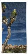 Joshua Tree In Joshua Tree National Park No. 279 Beach Towel