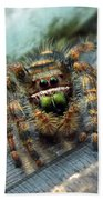 Jumper Spider 3 Beach Towel