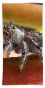 Jumper Spider Beach Towel