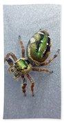 Jumping Spider - Green Salticidae Beach Towel