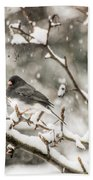 Junco In The Snow Beach Towel