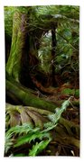 Jungle Trunks2 Beach Towel by Les Cunliffe