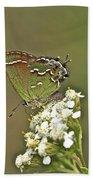 Juniper Or Olive Hairstreak Butterfly - Callophrys Gryneus Beach Towel