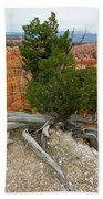 Juniper Tree Clings To The Canyon Edge Beach Towel
