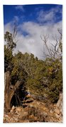 Juniper Trees At The Ghost Ranch Color Beach Towel