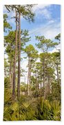Ancient Looking Florida Forest At Aubudon Corkscrew Swamp Sanctuary Beach Towel