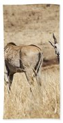 Juvenile Eland Beach Towel