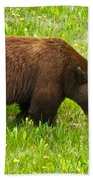 Juvenile Grizzly Bear In Kootenay Np-bc Beach Towel