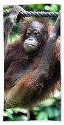Juvenile Orangutan Borneo Beach Towel