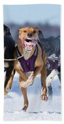 K9 Athletes Beach Towel by Mircea Costina Photography