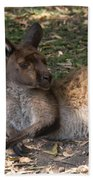 Kangaroos Beach Towel