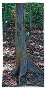 Kapok Trees Along The Trail In Manual Antonio National Preserve-costa Rica Beach Towel