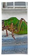 Katydid Beach Towel