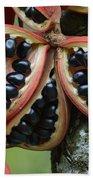 Kelumpang Sarawak Fruit Seeds Sepilok Beach Towel