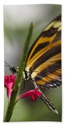Key West Butterfly Conservatory - Papilio Zagreus Beach Towel