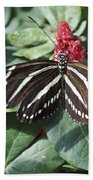 Key West Butterfly Conservatory - Zebra Heliconian Beach Towel