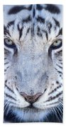 Khan The White Bengal Tiger Beach Towel