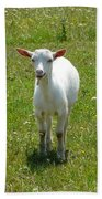 Kid Goat Beach Towel