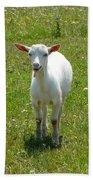 Kid Goat Beach Towel
