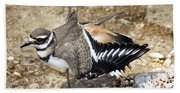 Killdeer Fakeout Beach Towel