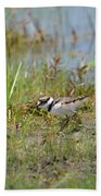 Killdeer Hatchling Beach Towel