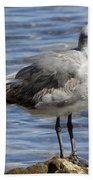 King Of The Rock Seagull Beach Towel
