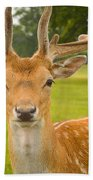 King Of The Spotted Deers Beach Towel