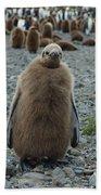 King Penguin Chick Beach Towel