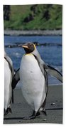 King Penguin Trio On Shoreline Beach Towel