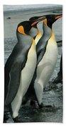 King Penguins Coming Ashore Beach Towel
