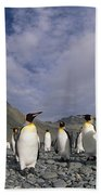 King Penguins On Rocky Beach South Beach Towel