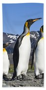 King Penguins St Andrews Bay South Beach Towel