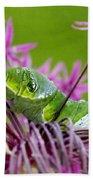King Swallowtail Caterpillar Beach Towel