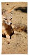 Kit Fox On Campus Beach Towel