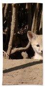 Kit Fox Pup Beach Towel