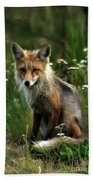 Kit Red Fox Beach Towel