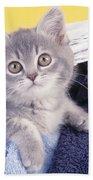 Kitten In Laundry Beach Towel
