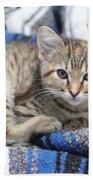 Kitten In The Blanket Beach Towel