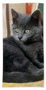 Kitten Beach Sheet