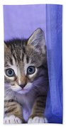 Kitten With A Curtain Beach Towel