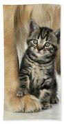 Kitten With Golden Retriever Beach Towel