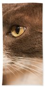 Kitty Boy Beach Towel