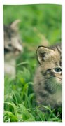 Kitty In Grass Beach Towel