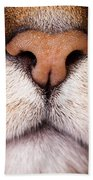 Kitty Nose  Beach Towel
