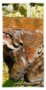 Knudsen Thin Toed Frog Beach Towel