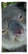 Koala Face Beach Towel