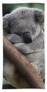 Koala Male Sleeping Australia Beach Towel