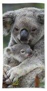 Koala Mother Holding Joey Australia Beach Towel
