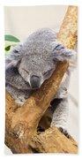 Koala Sleeping  Beach Towel